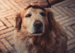 How to cope with the loss of a dog